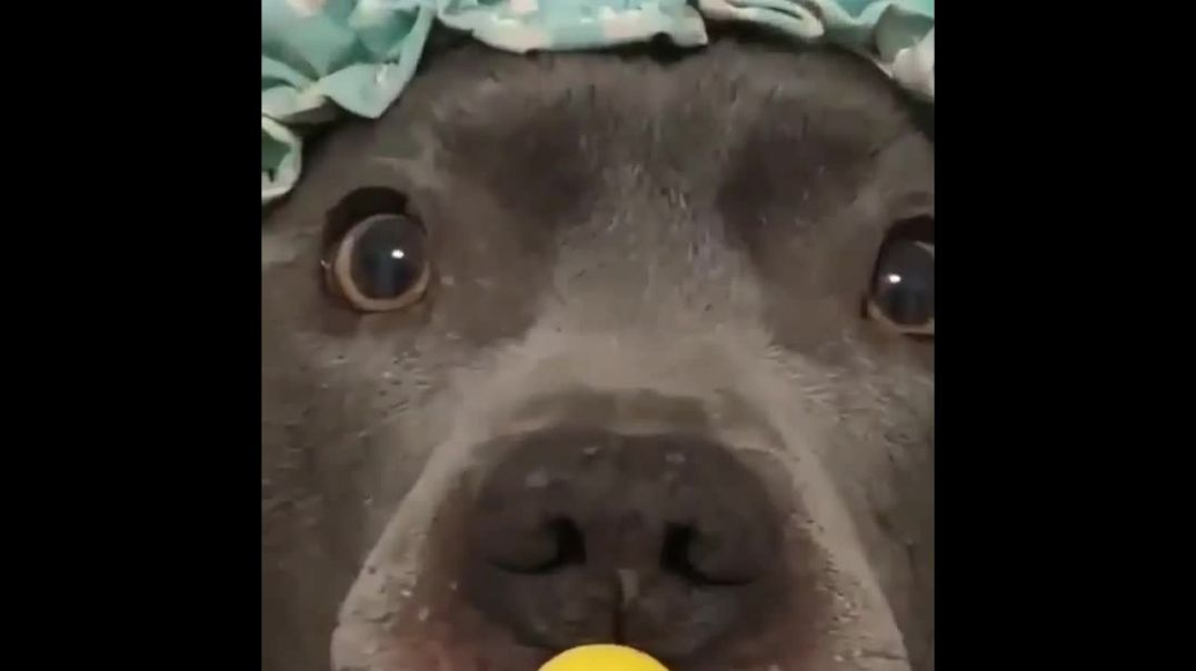 Funny Pets Moments #1.mp4